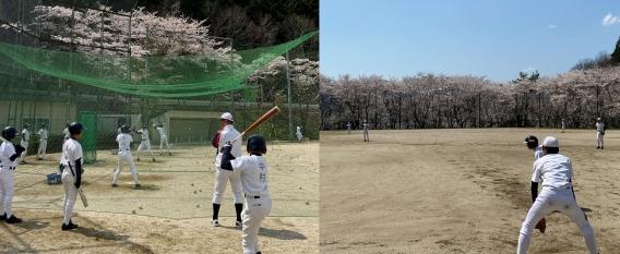 満開の桜の下での練習(4月4日)